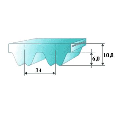 RPP14 borsásszíj méretre vágva